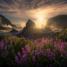 Oregon, wildflowers, beach, coast, waves, sunset, flowers, south coast, bandon, spring