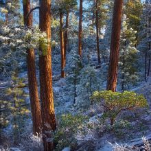 Winter, Forest, Beautiful, Ponderosa, Oregon, Freemont