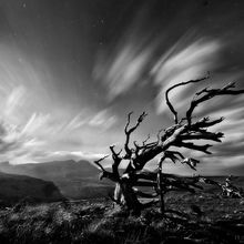 Ancient Tree, Tree, Blackfoot, Montana, Moonlight