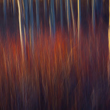 Willow, Aspen, Abstract, motion
