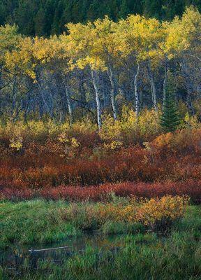 A Woodland Away (2012)