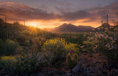 Desert Harmony