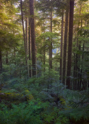 North Cascades Woodland (2007)