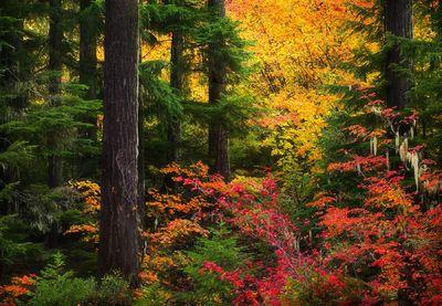 Oregon Autumn (2004)