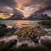 tree, waves, Torres del Paine, Chile, Patagonia.
