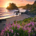 lupine, flowers, sunset, sea stacks, beaches, california, coast