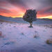 Juniper, Tree, Snow, Sunset, Jack-rabbit, Owyhee, Oregon, Remote