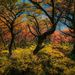 trees, argentina, autumn, fall, beech