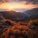 sunrise, Death Valley, ridge, cactus, cacti, warmth