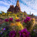 wildflowers, spring, Arizona, cactus