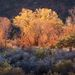beautiful, morning, colors, utah, high desert