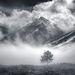 Raven, fog, peaks, Sierra, winter