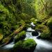 Green Canyon Cascades - Gorton Creek, Oregon
