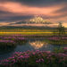 Cascade,