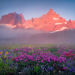 colorful, wildflowers, dramatic, misty, three sisters, sunrise
