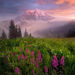 rainier, mystic park, flowers, summer, wildflowers, north face, willis wall, sunset