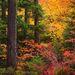Oregon Autumn, Jefferson Wilderness, Oregon