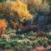 Utah, cottonwood, sagebrush, foliage, autumn