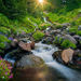 Rainier, Wildflower, Washington, Stream, Sun