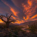 Old tree, Tree, Sunset, River, Vista, Argentina