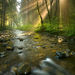 Radiance, Rock Creek Wilderness, Oregon