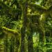 Hoh, Rain Forest, Washington, mossy, green, spring