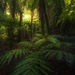 fern, forest, New Zealand, rainforest, South Island, green, mosses
