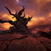 Sunset, Bristlecone, Gnarled, Old, Pine, Tree, Oldest