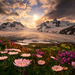boundary range, Alaska, British Columbia, aster, flowers, summer, marc adamus