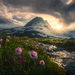 British Columbia, coast mountains, summer, wildflowers, aster, thunderstorm