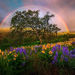 Rainbow, spring