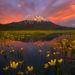 Summer Pond - Sparks Lake Meadows, Oregon
