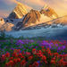 pacific range, british columbia, mountains, flowers