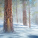Ponderosa, mammoth, california, winter, snow, red, wind, storm