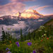 rainier, washington, spring, flowers, white river