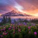 Rainier, sunrise, above, tatoosh, flowers, summer, warm, washington, national park