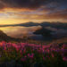 Wizard Island, Crater Lake, Penstemon, Flowers, Wildflowers, Summer, Warm, Sunrise, Oregon, National Park