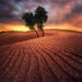 Lone, Trees, Endless, Sand, United Arab Emirates