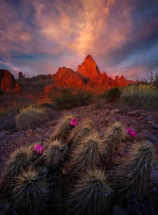 Desert Garden Kofa Mountains Arizona Marc Adamus
