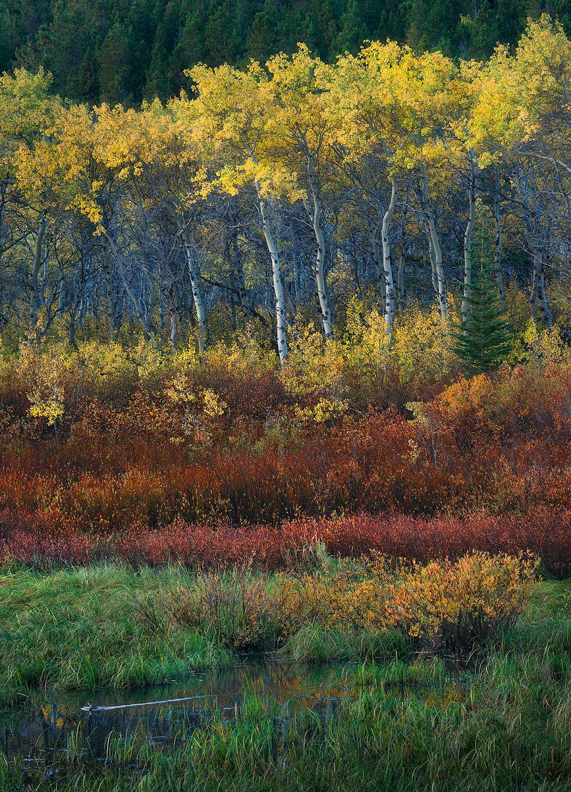 Duck Fall Montana Natural Forest Meadow, photo