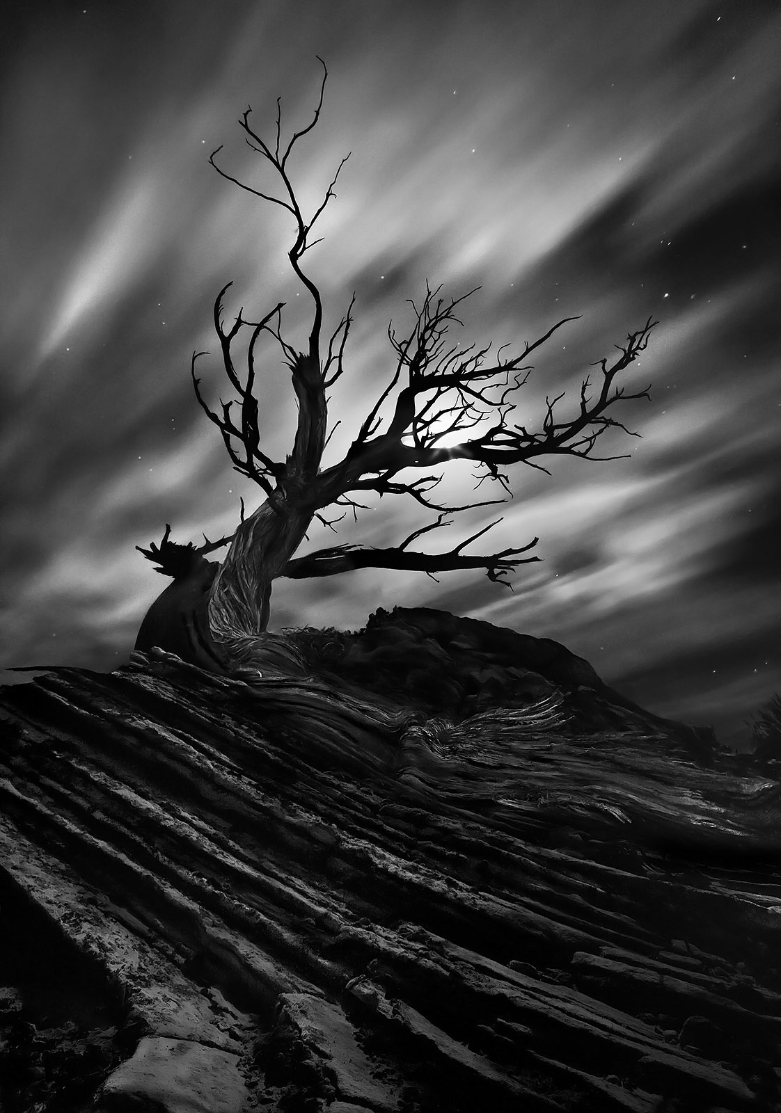 moonlight, juniper, gnarled, dead, sandstone, photo