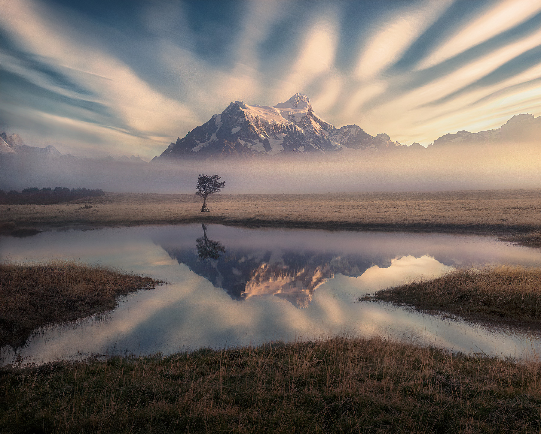Patagonia, torres del Paine, lone, tree, meadow, reflection, winter, fog, photo