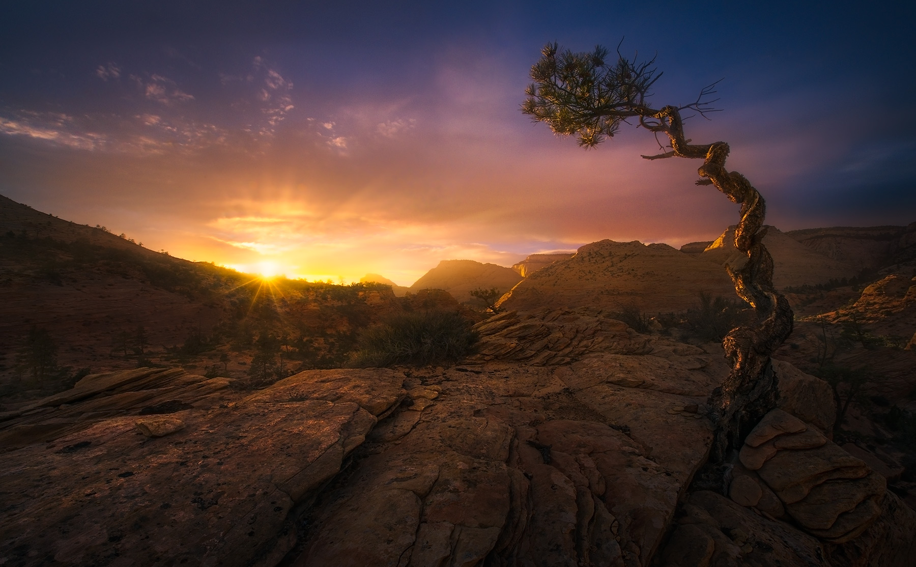 A lonely tree on the plateau of sandstone catches the last rays.