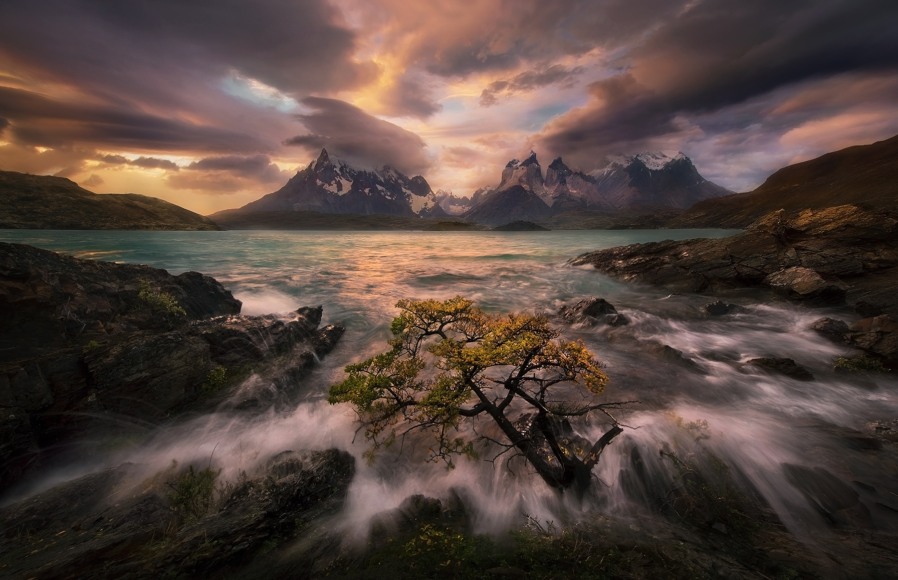 tree, waves, Torres del Paine, Chile, Patagonia., photo