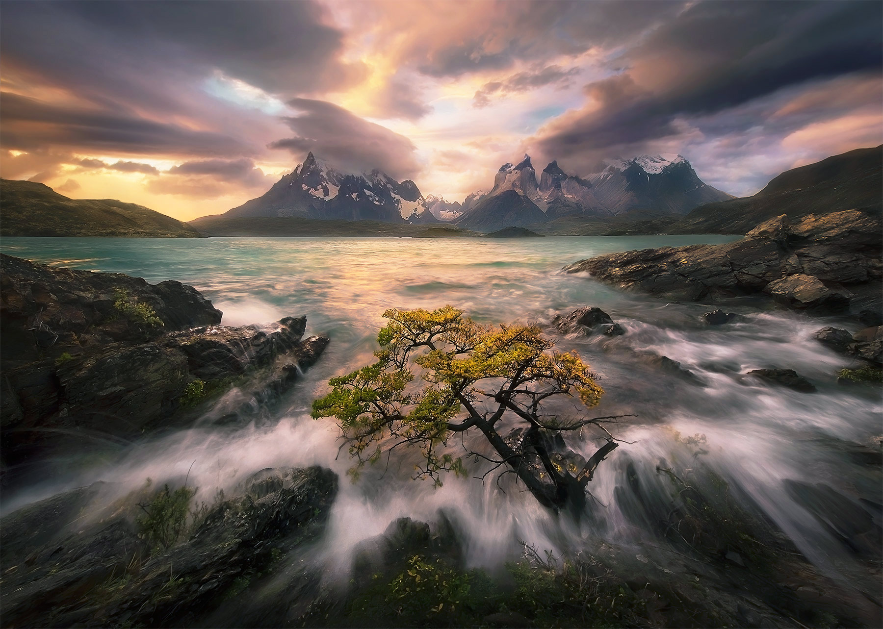 A lone tree in the waves beneath the high peaks of Torres Del Paine, Chile.