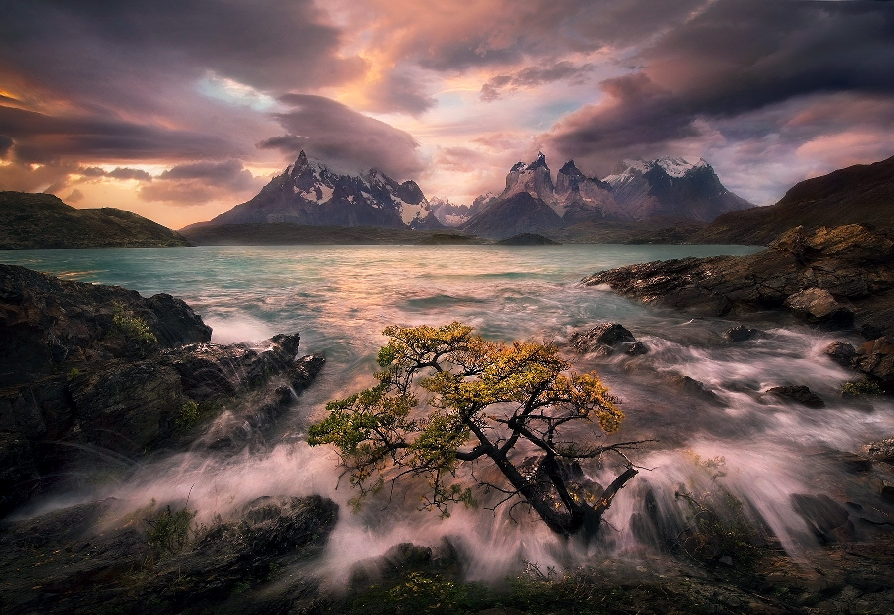 A lone tree gets into the surf action during high winds and a clearing storm over Torres Del Paine, Patagonia