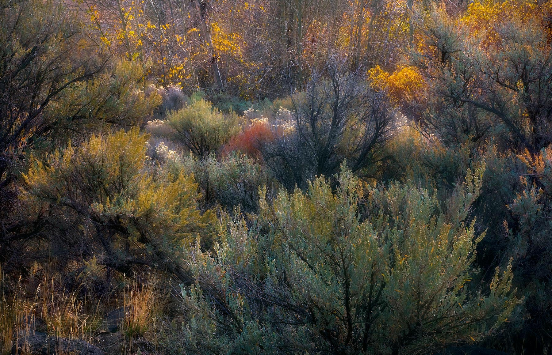 Great Basin, Sagebrush, Colorful, Autumn, Steens, photo