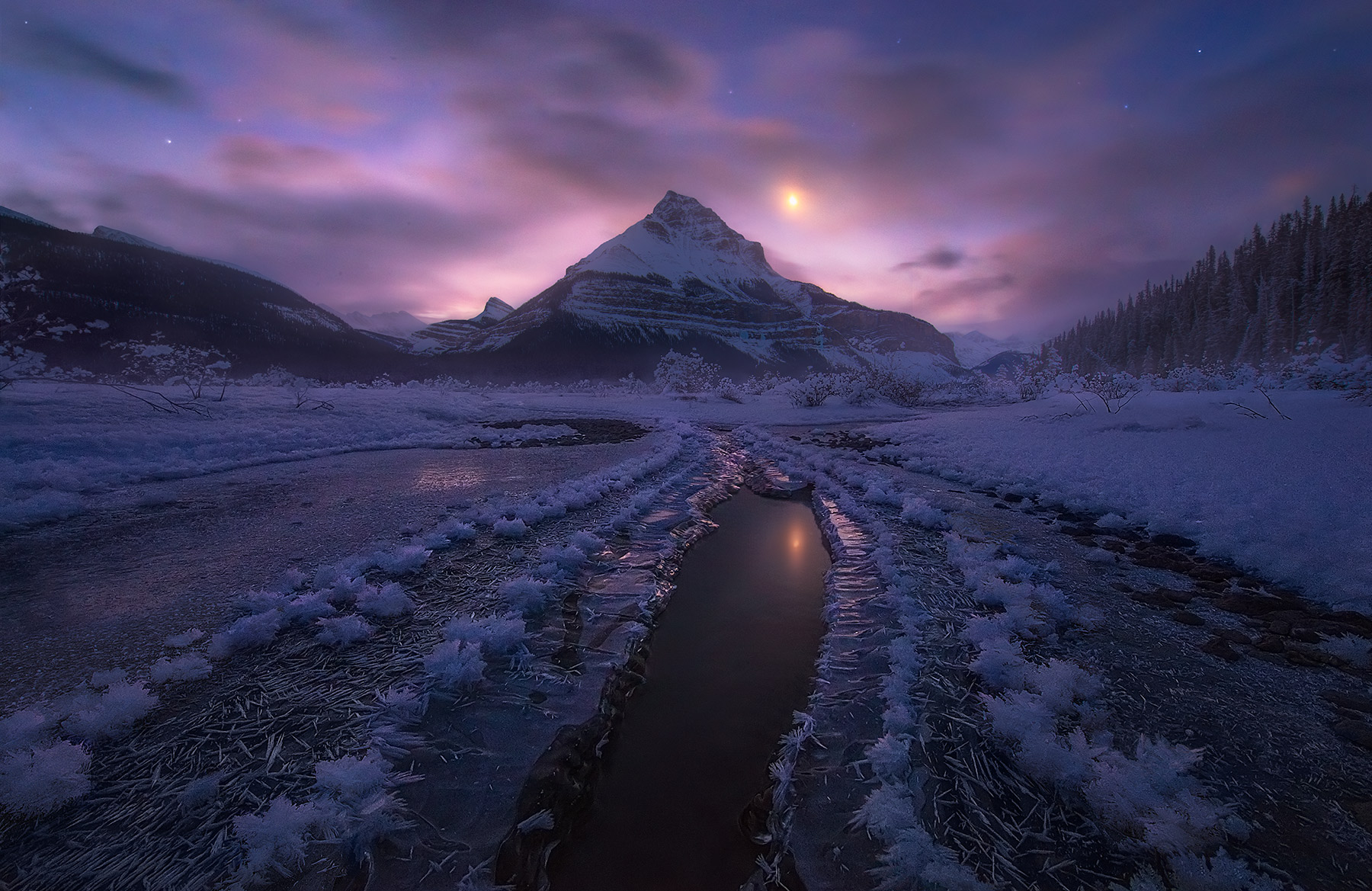 hoar frost, frost, ice, reflection, canadian rockies, canada, jasper, photo