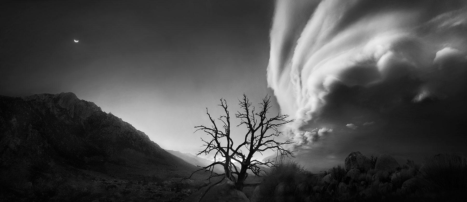 moon, california, tree, lone, sierra, night, clearing, photo