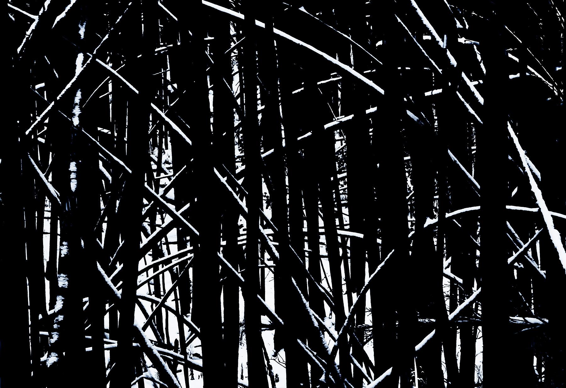 A black and white rendition of snowy highlights on a burned black forest in Far North British Columbia, Canada.